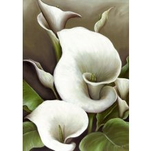 LILIES - CALLA LILYER - 49cm x 70cm 49cm x 70cm canvas Please Click the image for more information.