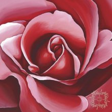 Kelly Lane ROSE BLOOM 40X40 Canvas. Kelly Lane ROSE BLOOM 40X40 CanvasCanvas is stretched onto a timber frame which is ready to hang on your wall Meas. Please Click the image for more information.