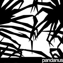 Pandanus Screen