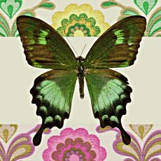 Green Butterfly on Green  Please Click the image for more information.