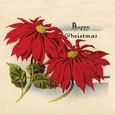 Xmas Vintage Pointsettia (sm)  Please Click the image for more information.