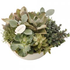large succulent centrepiece our centrepiece bowl makes a stunning arrangement for any reception area or table this elegant piece is planted with a selection of sculptural water wise succulents and a ceramic stamped emotive pebble  all handmade exclusively for Growing Giftsselect . Please Click the image for more information.