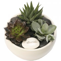 medium succulent zen bowl our eyecatching ceramic zen bowl is planted with a choice of 3 water wise succulents included in gift 1 medium zen bowl planted with 3 small succulents1 ceramic stamped emotive pebble or tag hand ma. Please Click the image for more information.