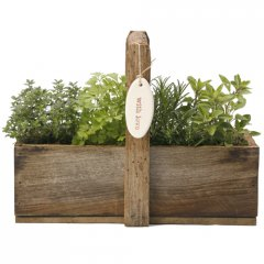 herb rustic gift box our recycled rustic wooden gift box with handle is planted with a selection of aromatic culinary herbs creating an instant gourmet garden that has great gift appealincluded in gift1 wooden gift box planted with 4 herb plants1 ceramic stamped pebble or taghandwritten gift card  care instructionsceramics hand made for Growing Giftsselect 1 pebbletag from handmade pebbles and add to your cartplease note this gift is shipped in its own cartoncannot be included with . Please Click the image for more information.