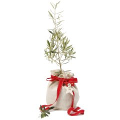 large olive christmas gift tree every garden should have an olive tree the living symbol of peace and happiness included in gift 1 large olive tree presented in a waterproof jute giftbag 1 ceramic stamped joy star jingle bells  grosgrain ribbon decoration growing gifts swing care cardhand made exclusively for Growing Giftscustomized pebbles . Please Click the image for more information.