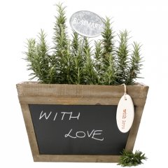rosemary remembrance chalk box  long known as the herb of remembrance rosemary symbolizes loyalty and friendshipthis fragrant and aromatic herb is planted up in a beautiful antiqued wood box with a blackboard on one side to write a personal message specif. Please Click the image for more information.