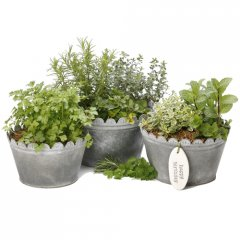 herb scallop pots