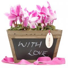fragrant cyclamen chalk box a stunning gift for any occasion what better way to say you care than a gift of fragrant cyclamens planted in a beautiful antiqued wood box with a blackboard on one side to write your loved one a personal message t. Please Click the image for more information.