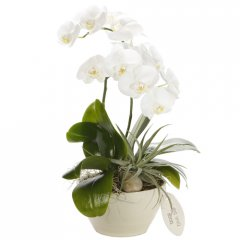 large phalaenopsis orchid bowl the phalaenopsis orchids are a popular indoor plant the elegant flowers make a beautiful display and last for several months at a time . Please Click the image for more information.