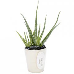 healing aloe vera bowl natures soothing balmthe aloe vera is also known as the first aid plant a handy gift for any home aloe vera extract created by pulverising the leaf is commonly used as a remedy for sunburn skin irritations  insect bites the aloe ver. Please Click the image for more information.