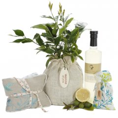 luscious lemon tree relax hamper the dwarf lemon tree produces masses of sweetly scented white flowers followed by an abundance of juicy full sized fruit. Please Click the image for more information.