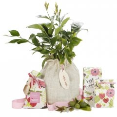 luscious lemon tree bloom hamper