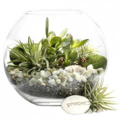 little creatures lucky money tree terrarium