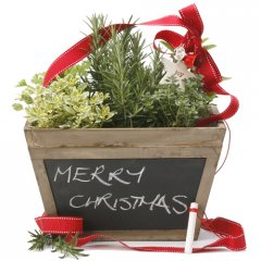 christmas herb chalk box  our beautiful antiqued wood chalkbox is planted with a selection of culinary herbs creating an instant gourmet garden that has great gift appeal. Please Click the image for more information.