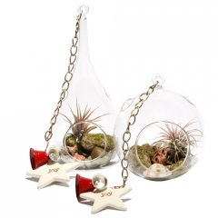'oh deer' hanging air plant terrariums air plants dont require soil to grow only moderate light and a good soak every weekvery lowmaintenance Beautif. Please Click the image for more information.