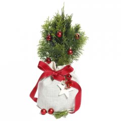 decorated christmas gift tree the perfect chistmas gift a living decorated tree that can be planted after the festive season this dwarf evergreen shrub is  suitable for a container or for the smaller suburban garden i. Please Click the image for more information.