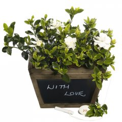 fragrant gardenia chalk box a stunning gift for any occasion what better way to say you care than a gift of fragrant gardenias planted in a beautiful antiqued wood box with a blackboard on one side to write your loved one a personal message t. Please Click the image for more information.