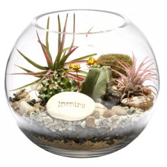 little creatures cacti terrarium  Beautiful as modern decor for the home or office these cacti plantings make unique  fascinating alloccasion gifts ou. Please Click the image for more information.
