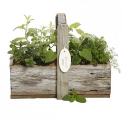 tea herb gift box our recycled rustic wooden gift box with handle is planted with a selection of aromatic herbs suitable for making herbal tea. Please Click the image for more information.