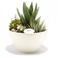 mature succulent & cacti zen bowl our eyecatching ceramic zen bowl is planted with a choice of 4 water wise succulents  cacti artfully arranged into a pleasing composition included in gift 1 medium zen bowl planted with 1 large and 3 small succulentscacti1 ceramic stamped emotive pebble or tag hand made . Please Click the image for more information.