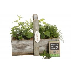 tea herb gift box with tea our recycled rustic wooden gift box with handle is planted with a selection of aromatic herbs suitable for making herbal tea. Please Click the image for more information.