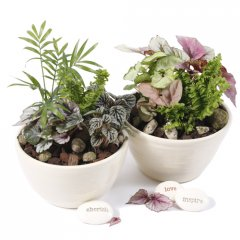bottle babies medium zen introducing our gorgeous living arrangements of small hardy indoor plants in gentle hues of greens easy care easy on the eye ideal for any occasion any location in the home or officeincluded in gift4 bottle babies planted in a ceramic zen bowl 1 ceramic stamped emotive pebble or taghand made exclusively for Growing Giftsselect 1 pebble . Please Click the image for more information.