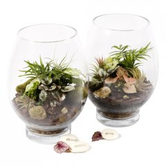 bottle babies large lotus terrarium introducing our gorgeous living arrangements of small hardy indoor plants in gentle hues of greens easy care easy on the eye ideal for any occasion any location in the home or officeour glass lotus terrarium arrives with a couple of companion air plants decorative moss  stonesquick and . Please Click the image for more information.