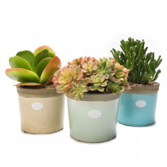 medium succulent crackle pot water wise succulents planted in beautiful iconic pots with a cracked glaze available in subtle hues. Please Click the image for more information.