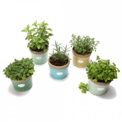 small herb crackle pots from $24.95 a selection of aromatic culinary herbs planted in beautiful iconic pots with a cracked glaze available in subtle hues. Please Click the image for more information.