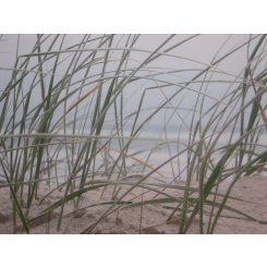 Sea Grass Canvas This Stunning Sea side image will add elegance to any room Canvas size is 680cm x 1480cm Please Click the image for more information.