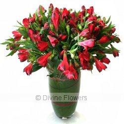 Peruvian Lily Vase (Alstroemeria)  Priced from $ 115  Click for more details