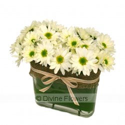 Whoops a Daisy!  Priced from $ 89  Click for more details