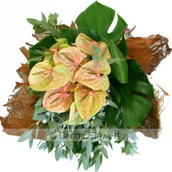 Anthurium Pistachio Wrap  Priced from $ 90  Click for more details