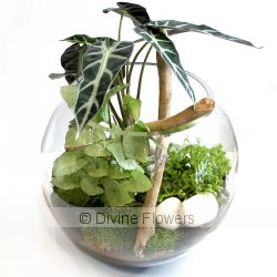 Terrarium   Priced from $ 105  Click for more details