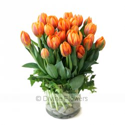 Tulip Fever  Priced from $ 125  Click for more details