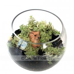 Buck's Terrarium  Priced from $ 62  Click for more details