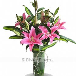 Oriental Lilies  Priced from $ 79  Click for more details