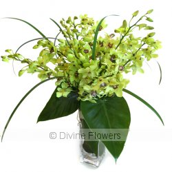 Singapore Sling (Dendrobium Orchids)  Priced from $ 115  Click for more details